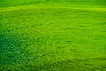 moravia: Green wavy hills in South Moravia, Stock Photo
