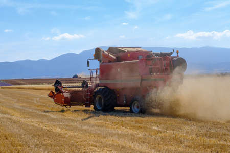 gathers: Harvester gathers the wheat crop in a field