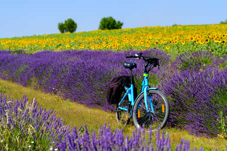 Electric bicycle in the lavender and sunflower field in Provence, France