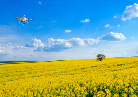 Lonely tree on the blooming colza field, drone in the sky