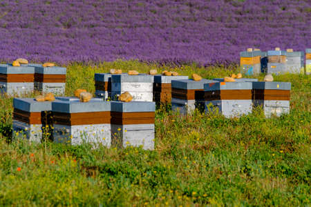hives: Bee hives in Provence, France Stock Photo