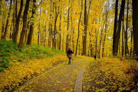 Rijpe vrouw die Noordse Gang in een park loopt bij daling. Achteraanzicht