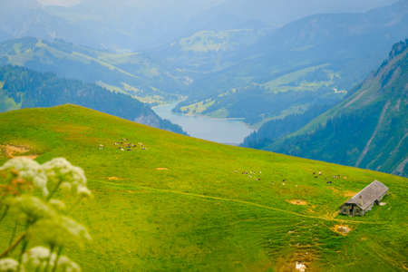 Typical summer mountains Switzerland landscape at sunny day time