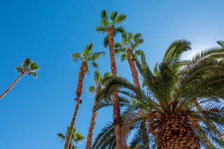 Bottom view to palms and hotel building against blue sky