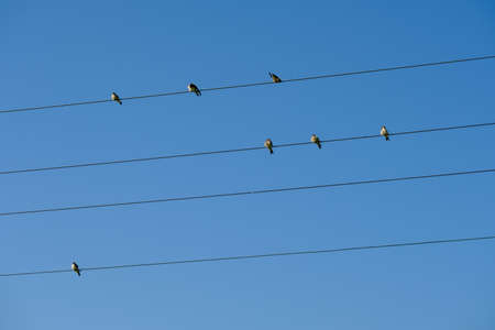 Birds sitting on electric wires on blue sky background Banque d'images