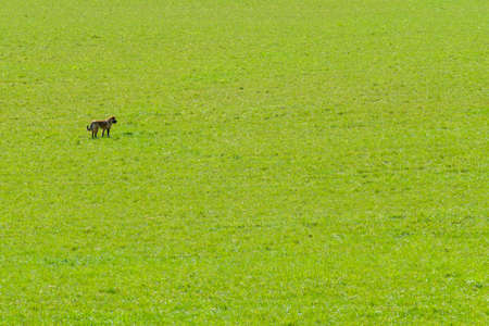 Dog standing in field on sunny day Stockfoto