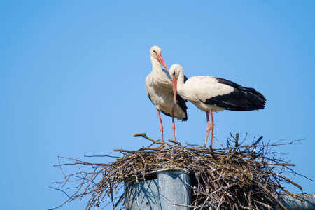 Storks standing in nest on sunny day