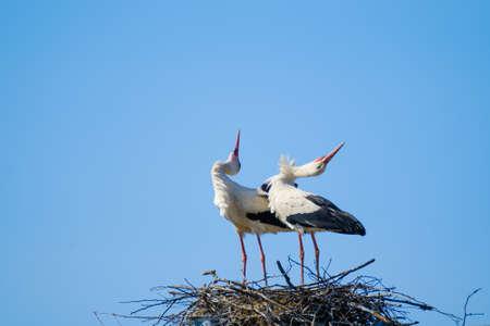 Graceful storks bending against blue sky