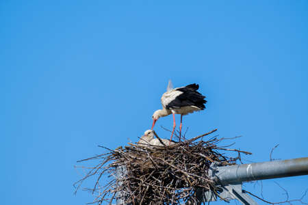 Stork with chick in nest
