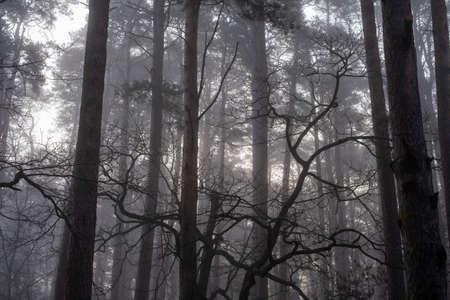 Trees growing in forest in foggy morning