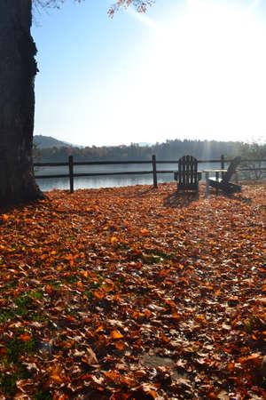 muskoka: Muskoka chairs by the autumn leaves