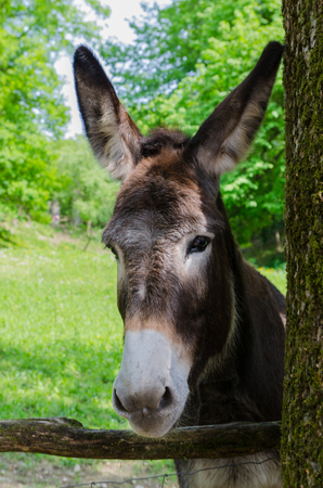 donkey in the park photo