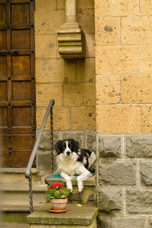 dog waiting for owner at the door photo