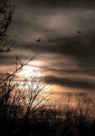 Sunset over the forest. sky, landscape,  nature,