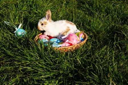 the feast of the passover: Festa di Pasqua, uova di Pasqua e conigli.