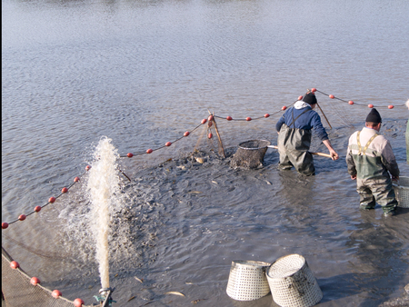 would: The fishermens nets would be the carp in the lake.