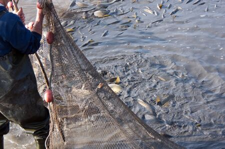 trawler net: The fishermens nets would be the carp in the lake.