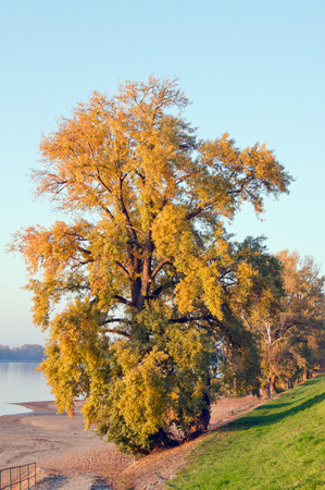 riverside trees: The riverside trees decorated in the colors of autumn.