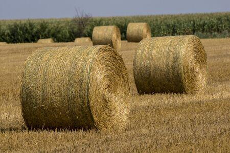 Die gesammelten Strohballen bleiben Getreidestoppeln.