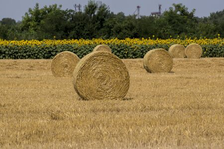 The collected straw bales remain cereal stubble. Stock Photo