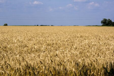 From the wheat field waiting for harvest.