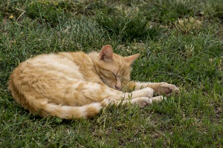 The lazy cat sleeping in the garden. Stock Photo