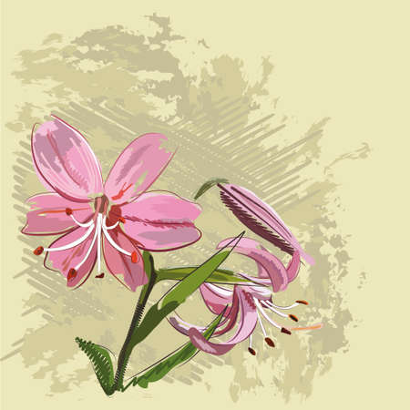 curve line: Beautiful pink flowers of a lily on a gentle background Illustration