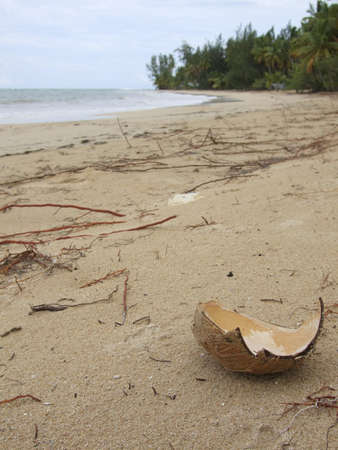Coconut on the beach Stock Photo - 16685399