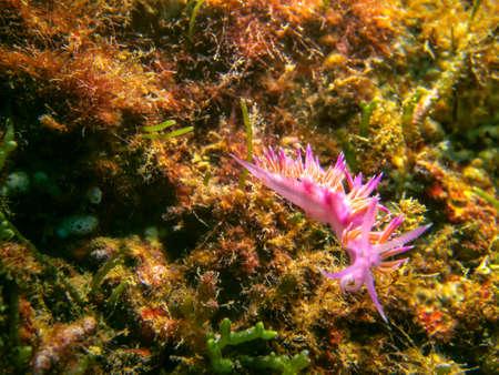nudibranch: The nudibranch.