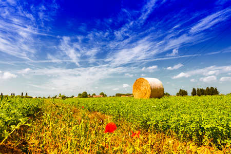 Field after harvest. photo