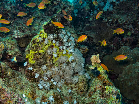 reef fish: Little fish on the reef. Stock Photo
