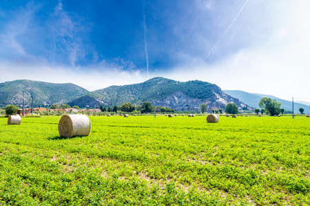 Hay bales after the harvest. photo