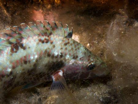 underwater life: Underwater life. Stock Photo