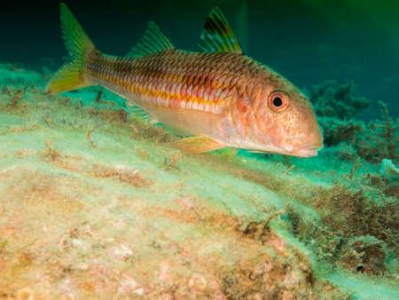 Underwater life. Stock Photo