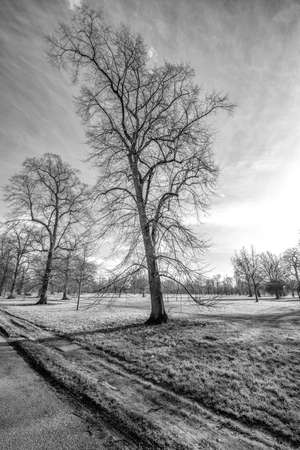 hyde: Tree in Hyde park. Stock Photo