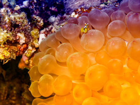 nemo: Anemone House for Nemo.