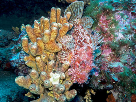 stonefish: Bad fish.