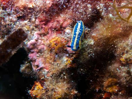 small animals: Small animals submarines.