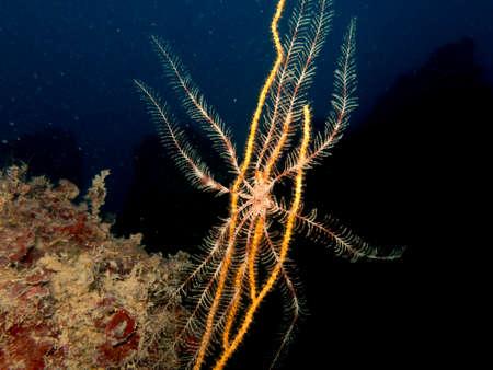 sea fans: Beautiful coloured sea fans. Stock Photo