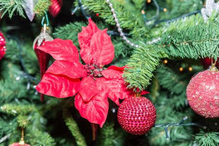 celebration: Christmas ornaments.