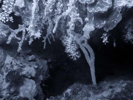 Mediterranean coral reef. Stock Photo