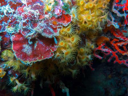 Coral in Mediterranean sea.