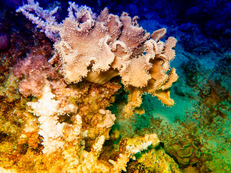 Shapes and colours of the Red Sea. 免版税图像