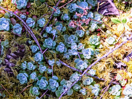 pacific northwest: Some colorful growth on a Pacific Northwest forest floor Stock Photo