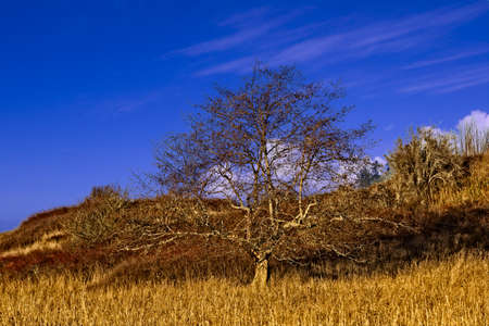 A lone tree on a winters day in the Clallam County Part near the Dungeness Spit.  The brown grass, wild rose bushed with red berries, and the blue sky surround the tree. Stock Photo