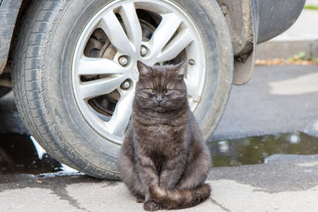 Beautiful stray cat sitting behind a car