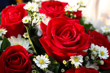 To the beautiful red roses for Valentines