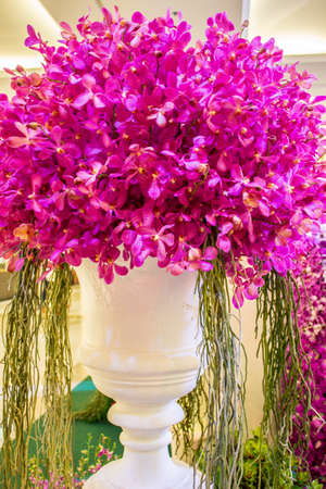 BANGKOK, THAILAND-JUNE6: white vase decorated with pink orchids Spicies in the event of 7th Siam Paragon Bangkok Royal Orchid Paradise on June 6, 2013 in Bangkok Thailand.