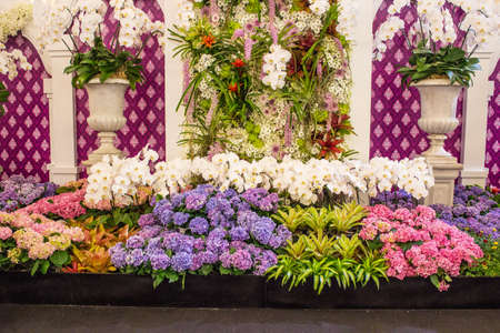 BANGKOK, THAILAND-JUNE6: beautiful decor of a variety of more than 81,000 species of orchid flower Spicies in the event of 7th Siam Paragon Bangkok Royal Orchid Paradise on June 6, 2013 in Bangkok Thailand. Editorial