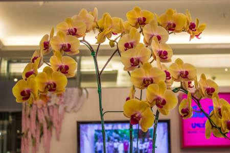 BANGKOK, Thailandia-JUNE6: orchidea spezie gialli in caso di 7 � Siam Paragon Bangkok Royal Orchid Paradise il 6 giugno 2013 a Bangkok in Thailandia. Editoriali